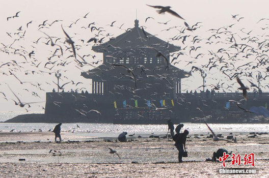 Best season for bird-watching in Qingdao