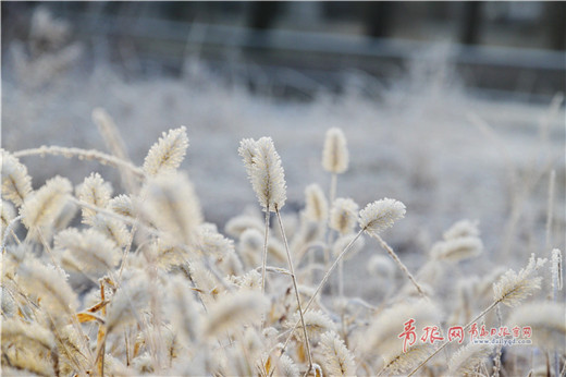 Rime creates a wonderful winter scene in Qingdao
