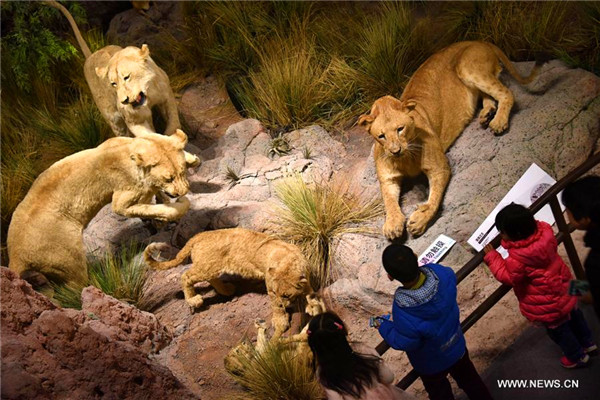 People enjoy exhibits at Behring Natural History Museum in Qingdao