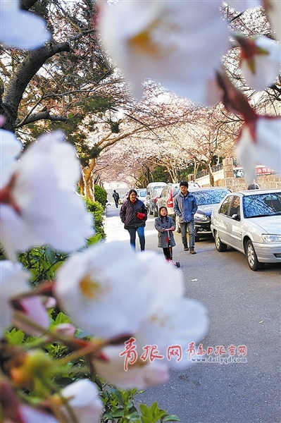 Qingdao welcomes more tourists during tomb-sweeping festival