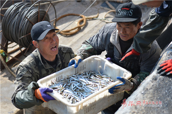 Sand lance fishing season underway in Qingdao